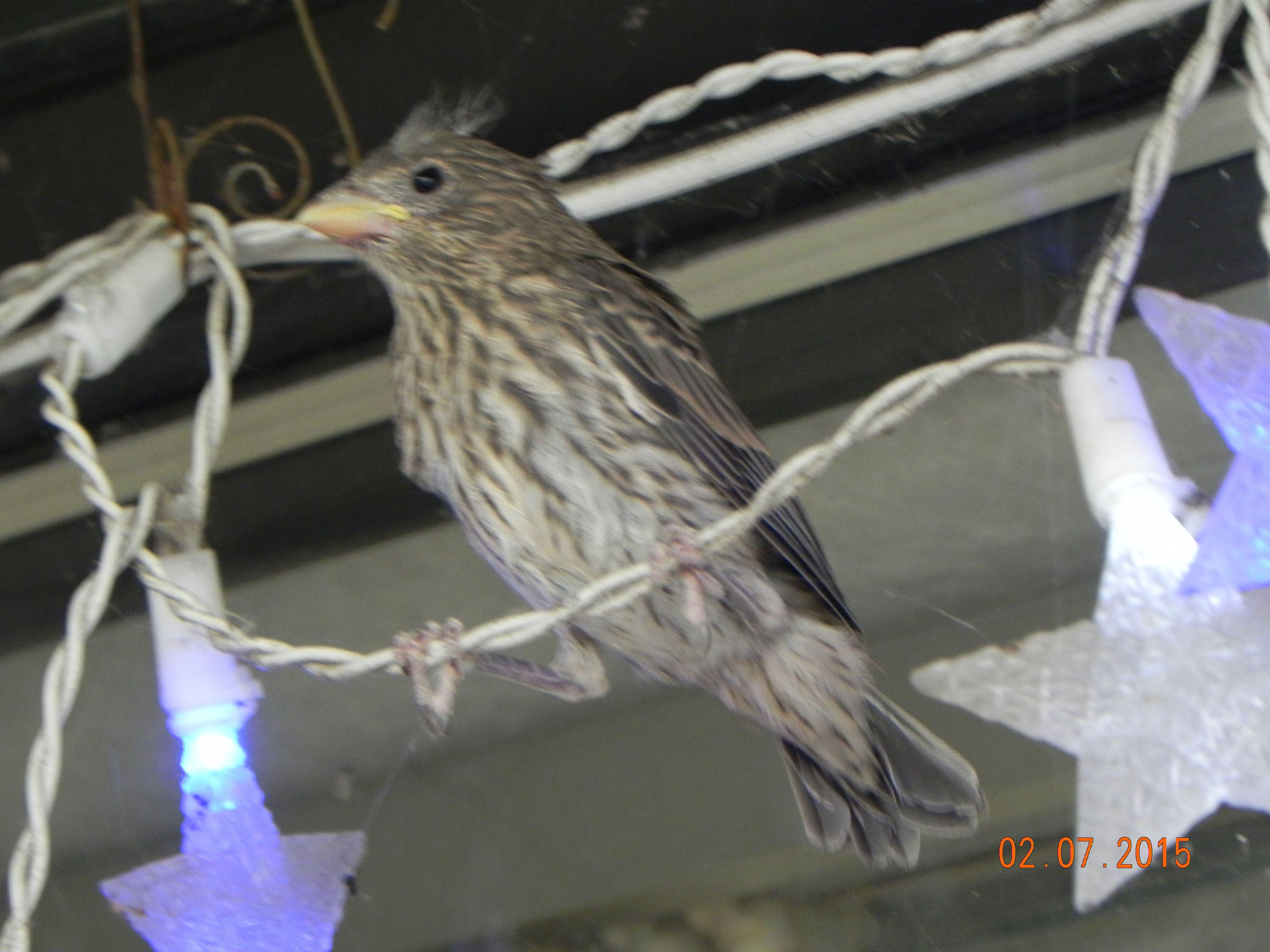 Baby bird, just ready to fly | Birds, Animals, Baby bird