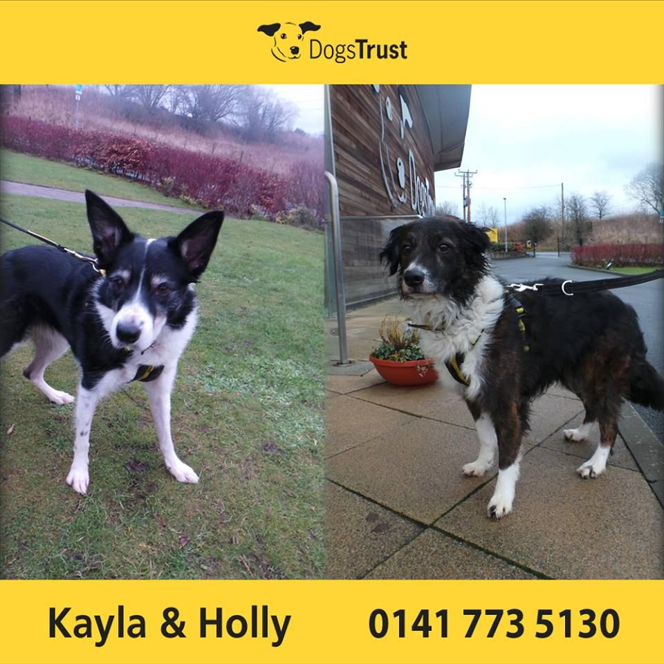 Kayla and Holly are both sweet girls at Dogs Trust Glasgow