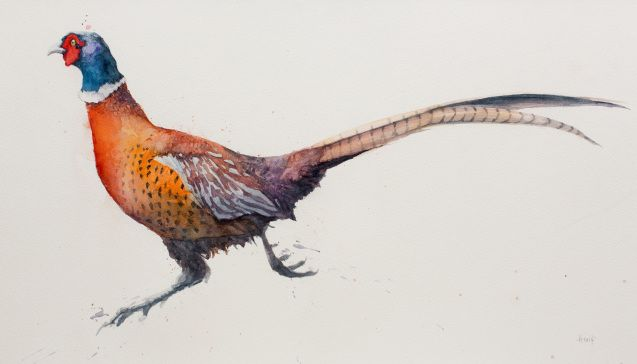 Running Pheasant - Alex Egan - watercolour