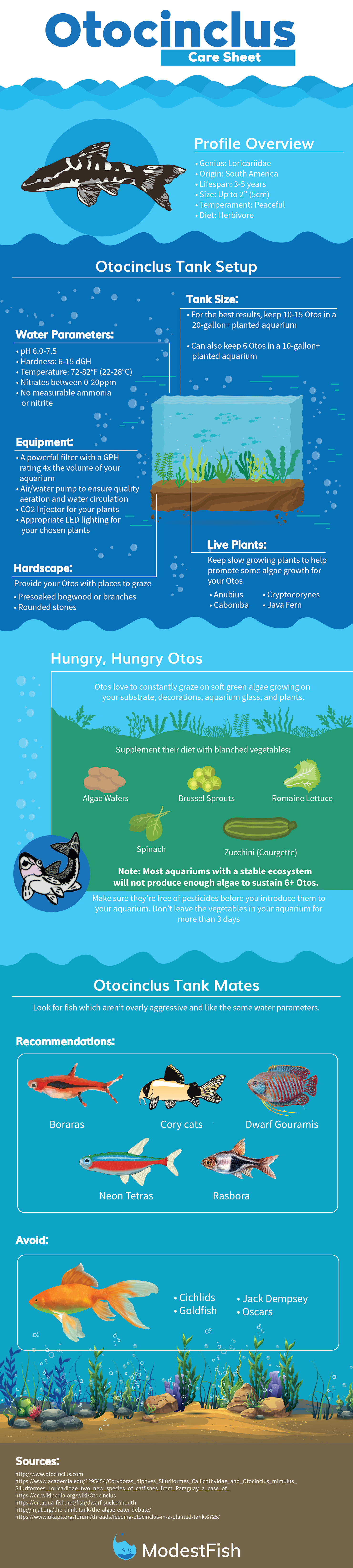 Check out our new infographic guide on how to care for Otocinclus