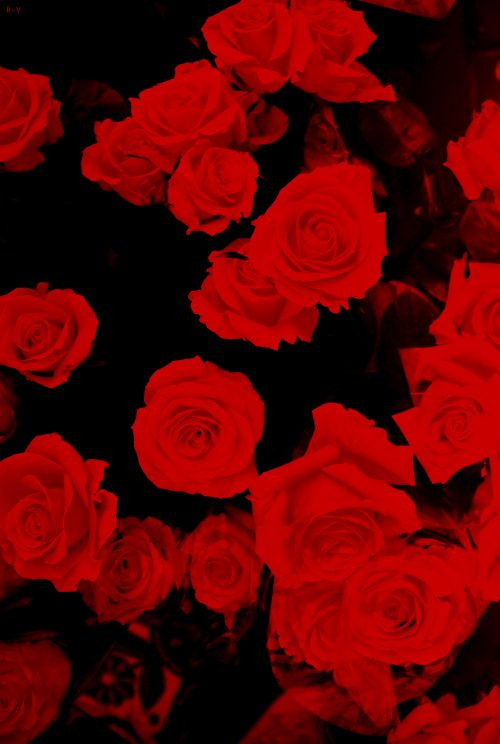 Pin By Adela Garcia On Colors Red Black Flower Wallpaper Iphone Wallpaper Girly Flowers