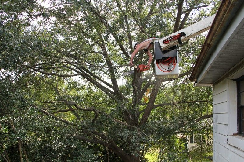Eastern Tree Service is your tree trimming expert in the