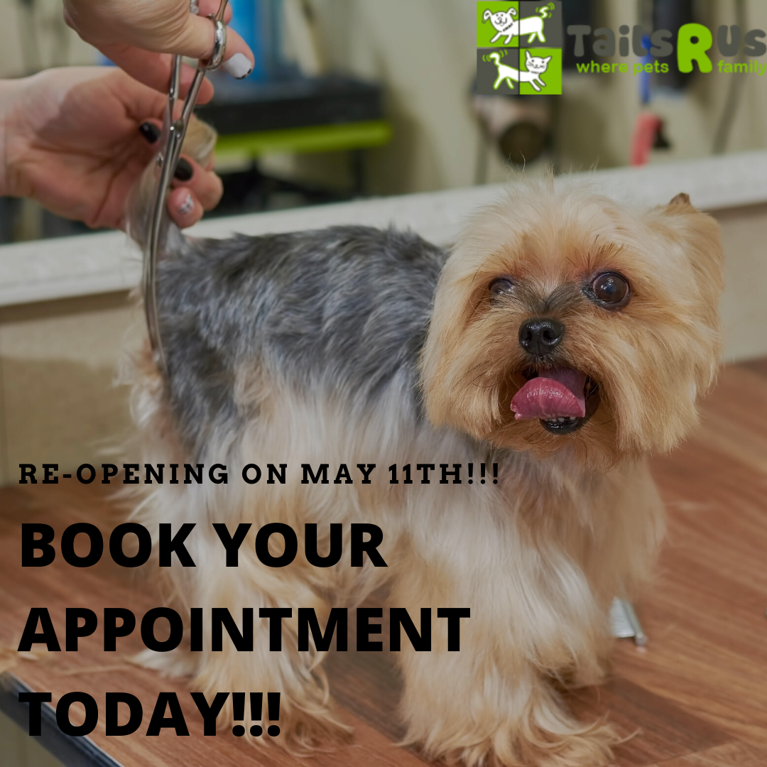 Our Phone Lines Are Now Open Call 304 776 8245 To Book An Appointment Today The Phone May Be Busy Due To High Demand But Don In 2020 Dog Grooming Grooming Today