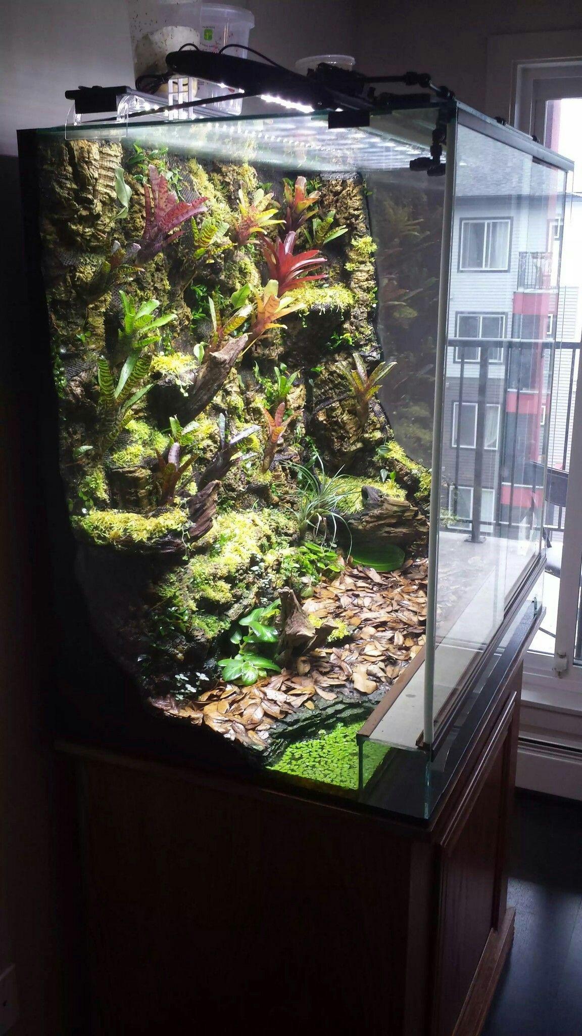 Cork Background Tanks Reptile Terrarium Gecko Terrarium Vivarium