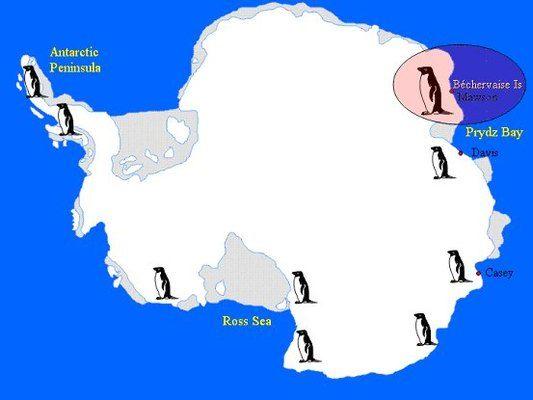 Diagram detailing the bchervaise island study site and adlie diagram detailing the bchervaise island study site and adlie penguin distribution around antarctica publicscrutiny Images
