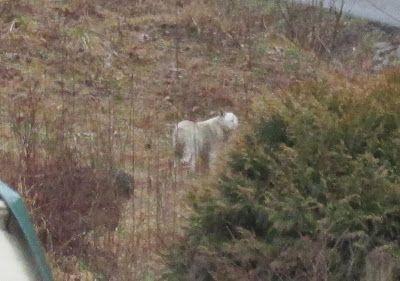 More Big Cat Sightings In Kentucky