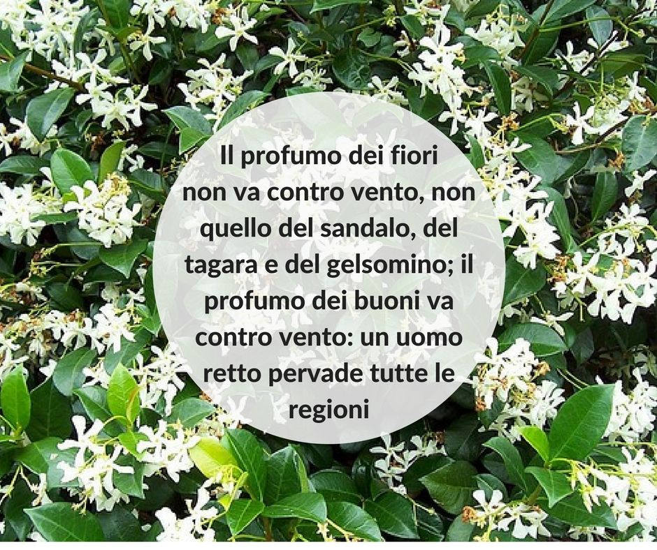 Quote #quotes #quote #aforismi #nature #natura #flowers