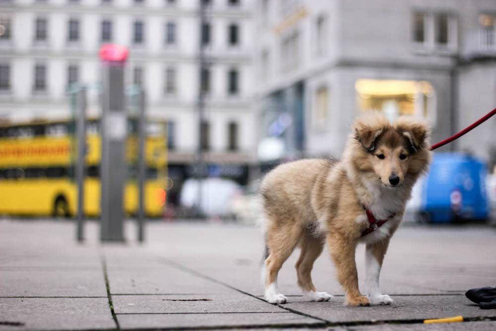 Hamburg City Dog Mit Hund In Der Grossstadt Hunde Hund Und Katze Und Hamburg City