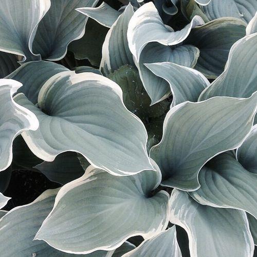 botanical // blogmichaela