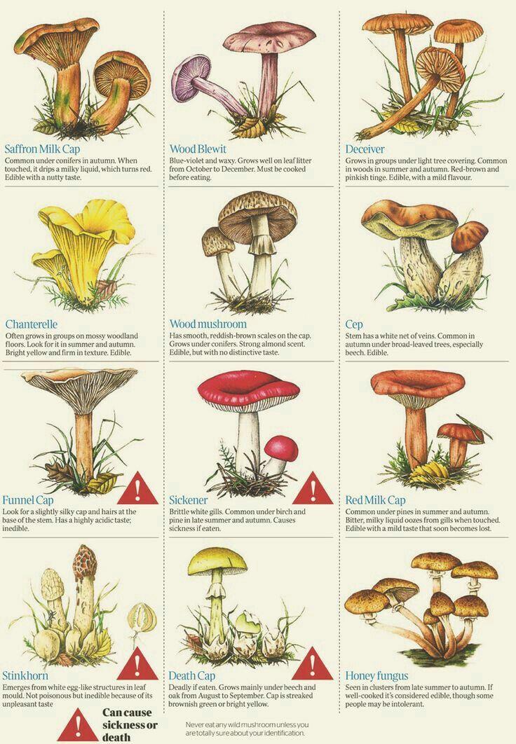 killer di funghi naturali