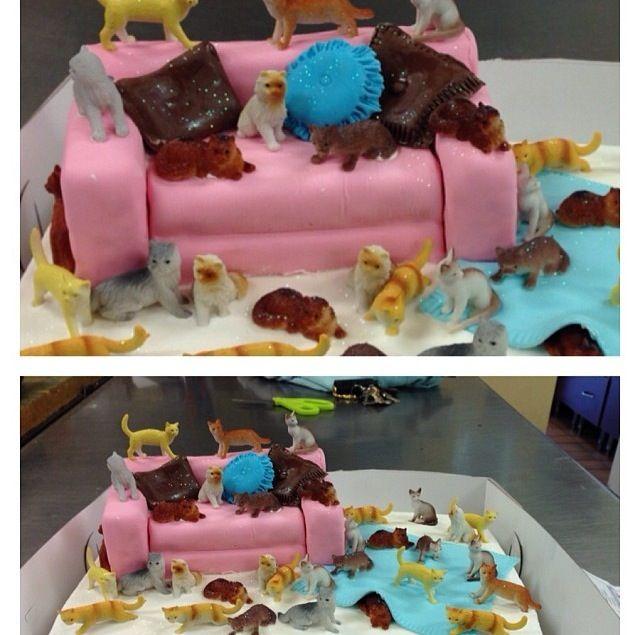 Crazy cat lady cake Story of my life Great Dane Bakery Cake