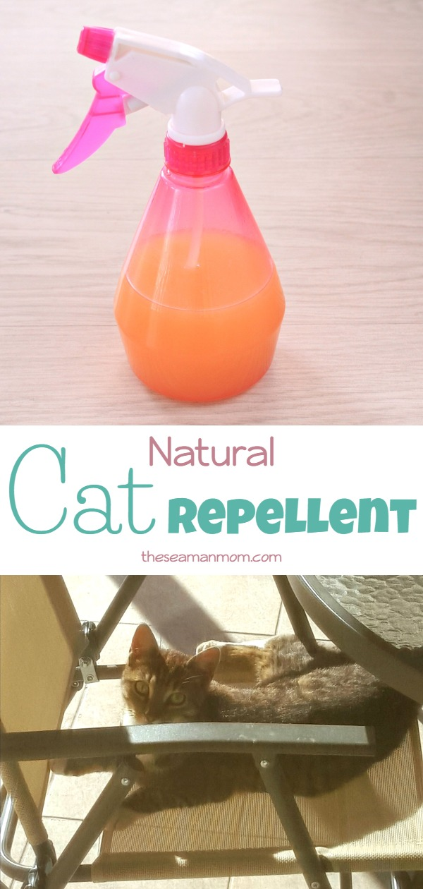 Pin by Tammy Rush Miller on cat in 2020 Cat repellant