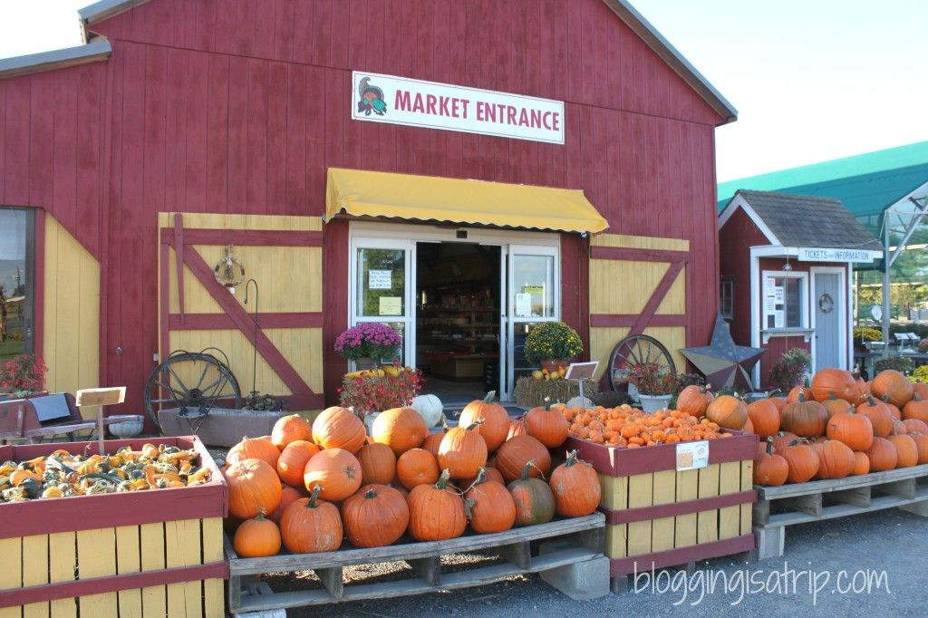 country barn market barnyard kingdom in lancaster pa is fall family fun travel. Black Bedroom Furniture Sets. Home Design Ideas