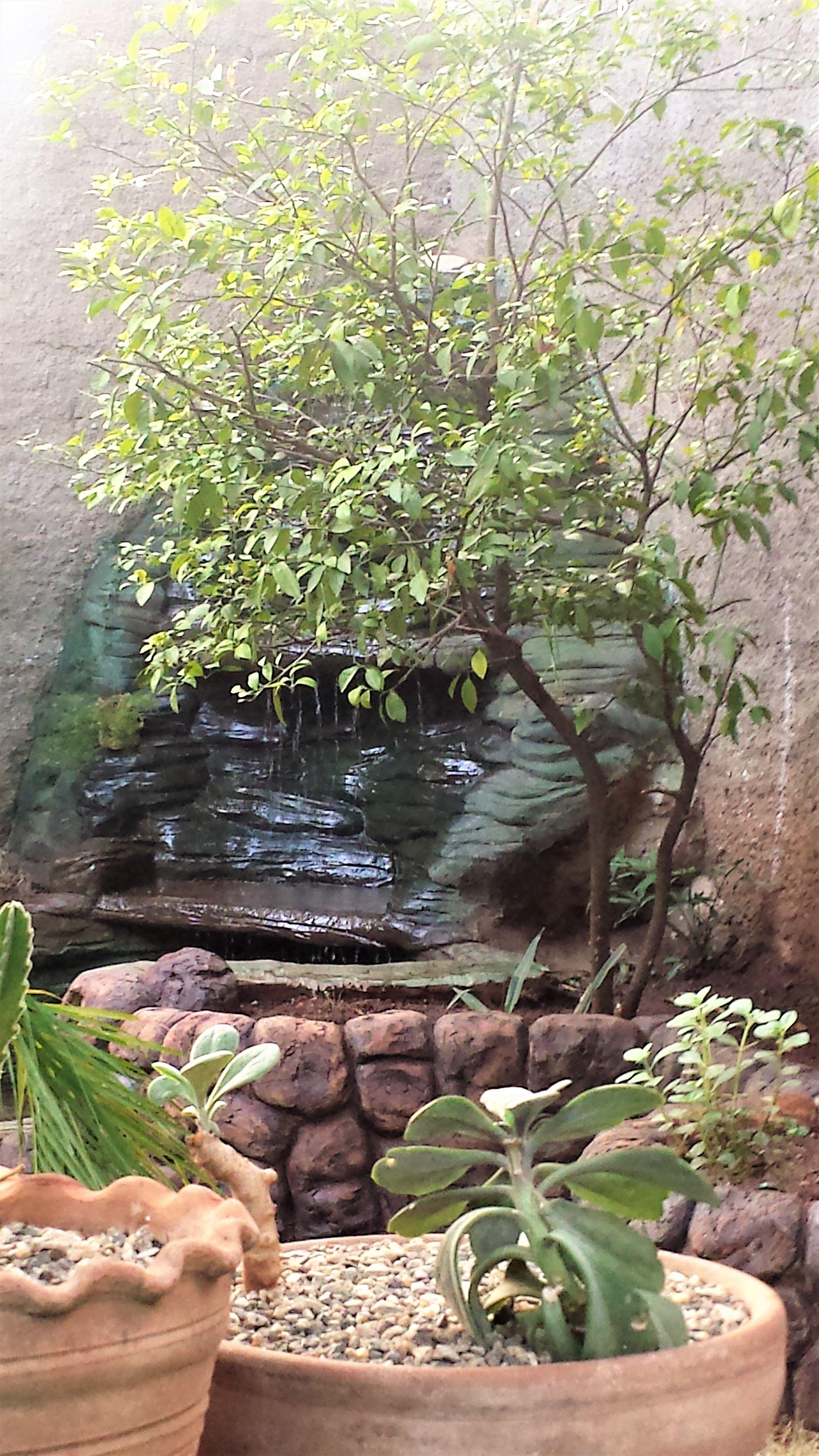 Parte De Mi Jardin Reconstruido Nuevo Un Oasis En La Ciudad