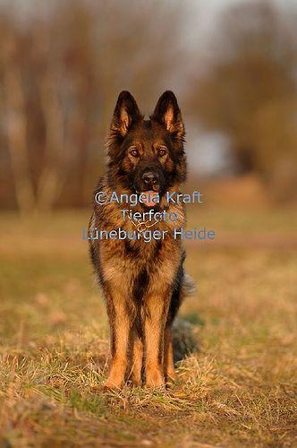 Angela Kraft www.kraft-foto.de   Top Bilder unserer Lieblinge! Hier noch ein Tip: http://besteversicherungenonline.de/hundever