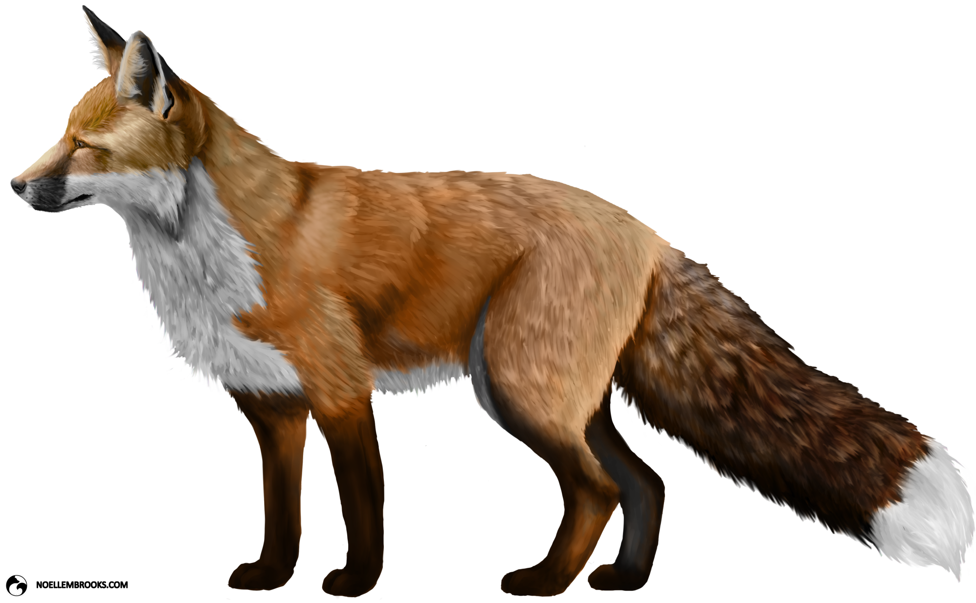 Anya The Red Colored Domesticated Red Fox Png 1996 1235 Pet Fox Fox Animals