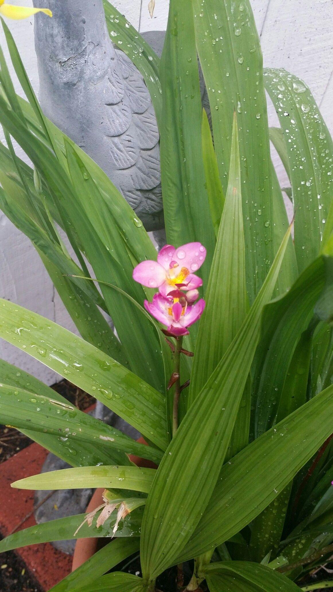 Ground orchid gardening pinterest flowers and gardens