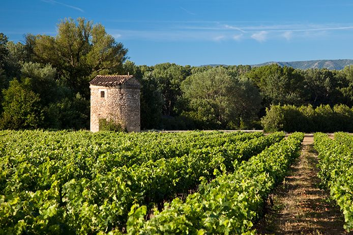 Image result for watchtower in vineyard