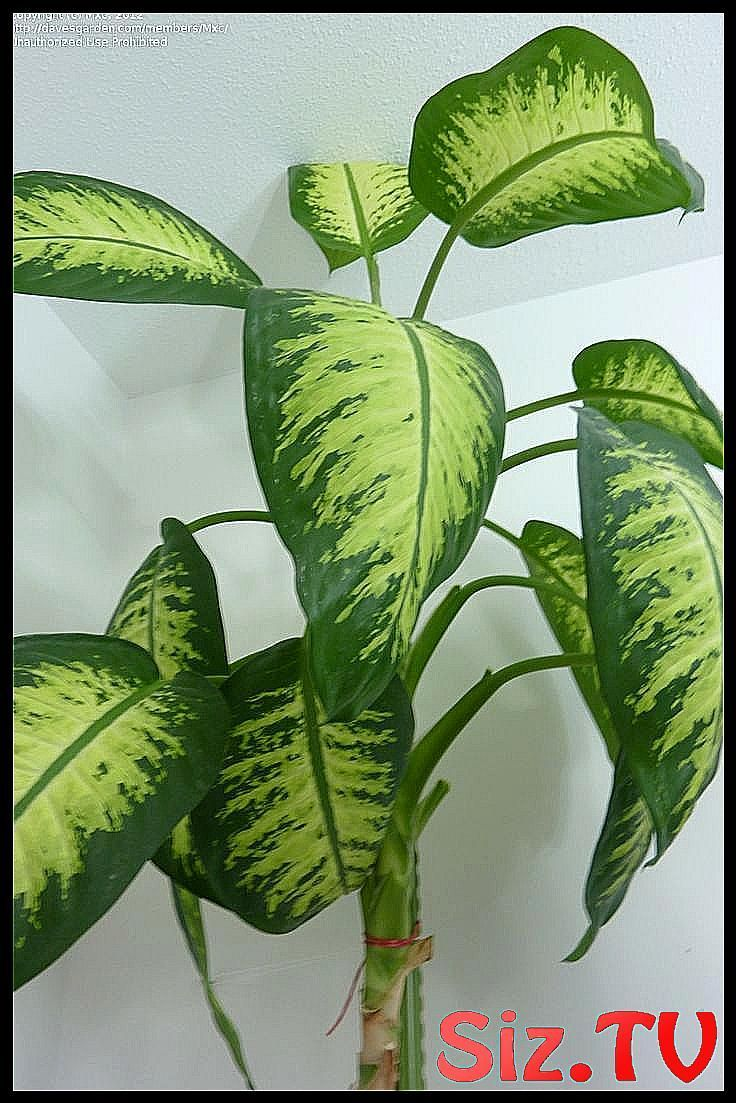 Indoor plants identify themselves by pic | Plant ...