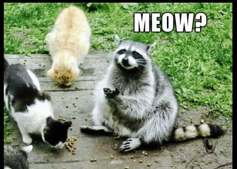 FURiday Fuzzball Funnies Funny animals, Funny animal