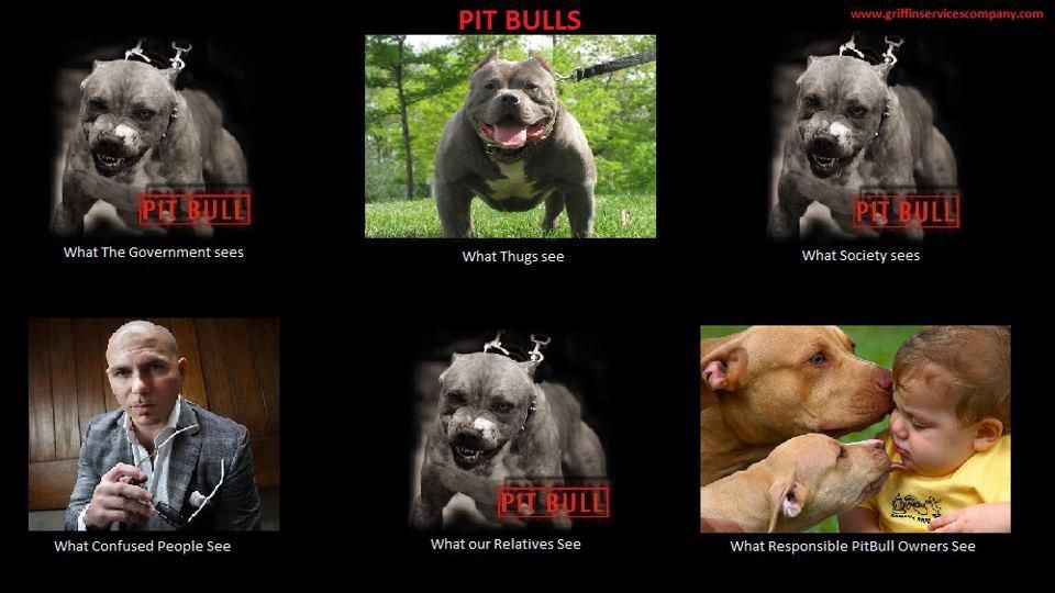 "funny pitbull pics | That ""What I Really Do"" Meme, Pit Bulls Edition 