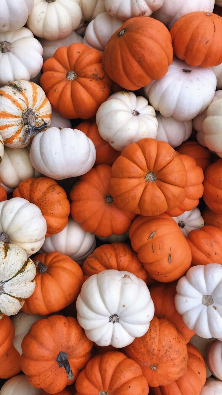 Pin By Adri Longoria On Cute Pumpkin Wallpaper Cute Fall Wallpaper Halloween Wallpaper Iphone