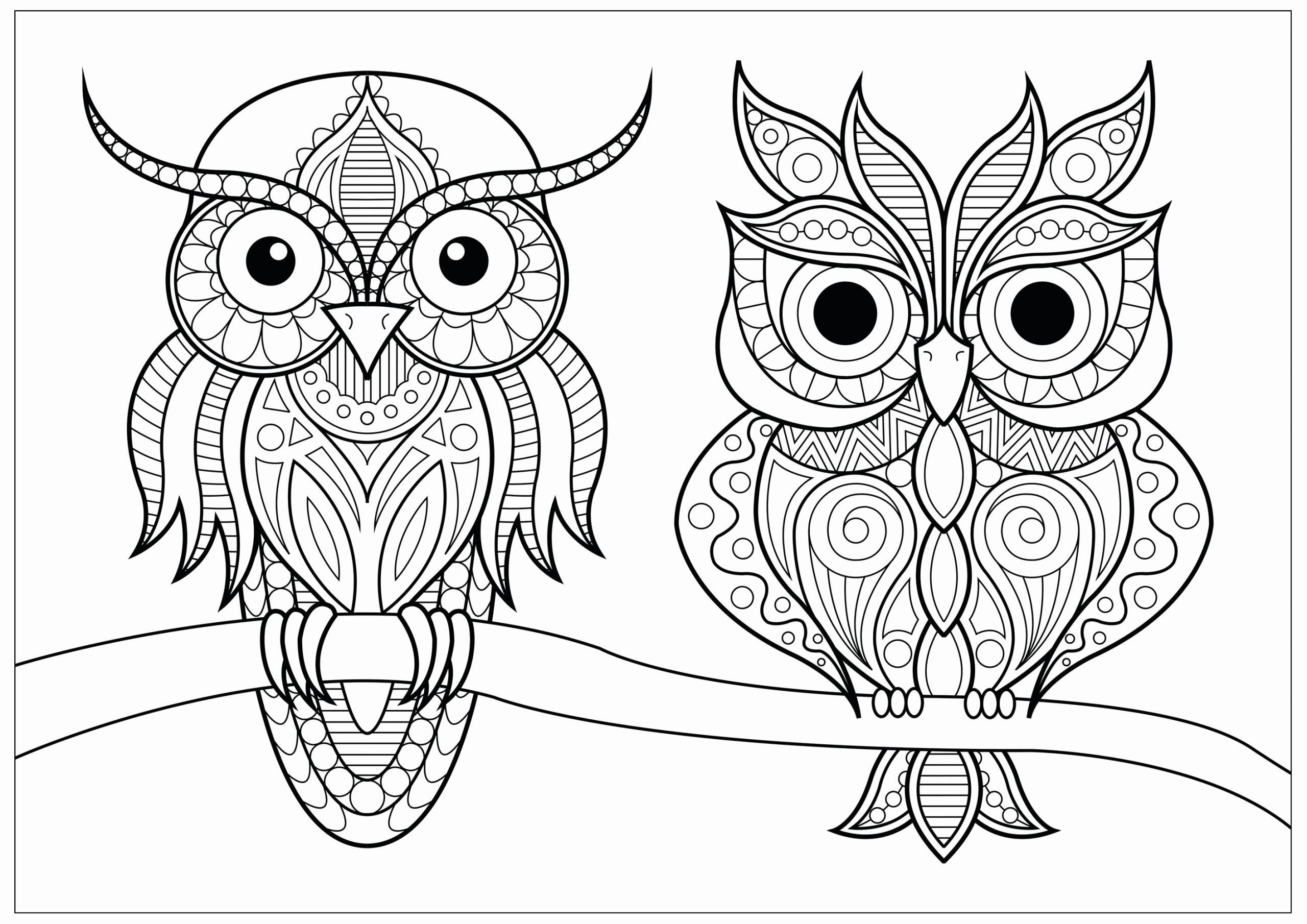 Owl Coloring Books For Adults Luxury Two Owls With Simple Patterns