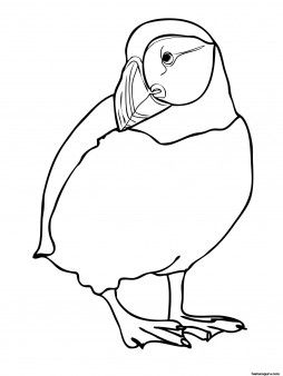 Printable zoo birds atlatntic puffin coloring page for Puffin coloring pages to print
