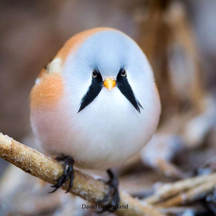 Bigotudo En 2020 Pajaros Hermosos Aves De Compania Aves Raras