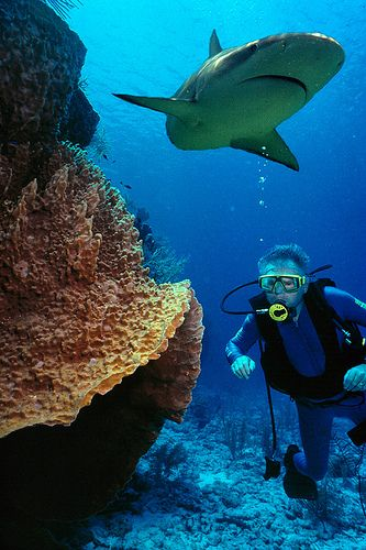 Diving With Sharks Acting Like You Re Part Of The Bottom Topography Helps Them Feel Less Frightened Of You And Your Bubbles Diving Best Scuba Diving Coiba