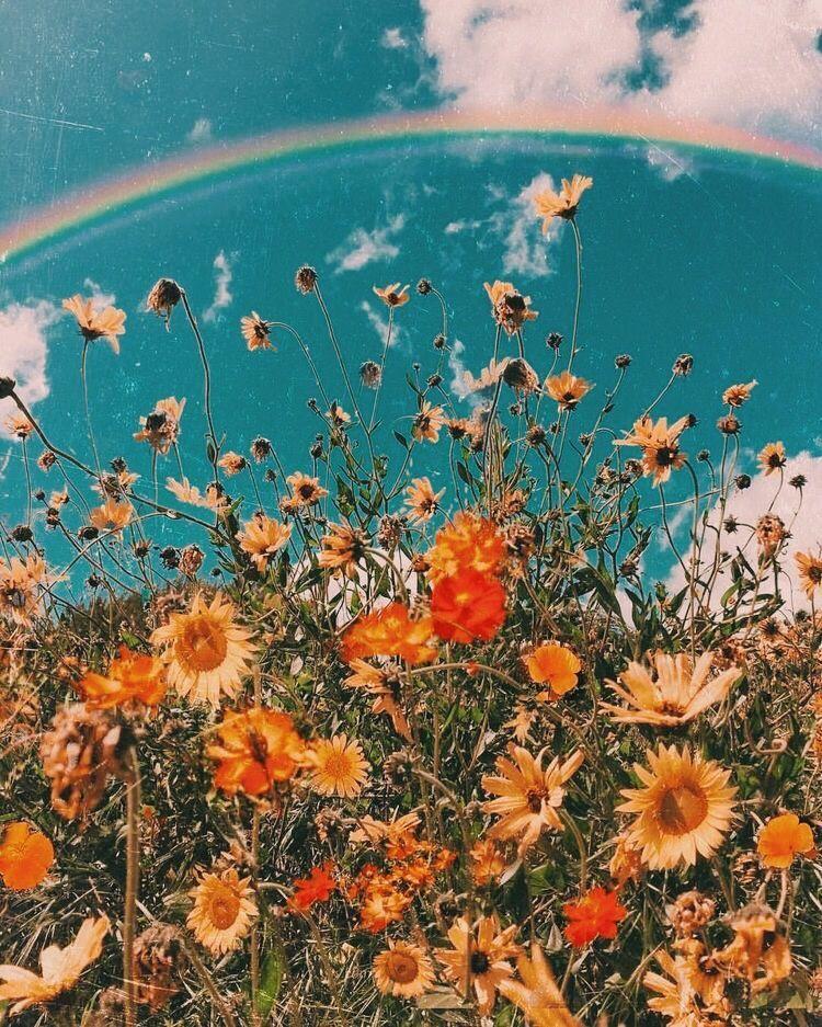 VSCO - goodvibes-vsco #flowershintergrundbilder