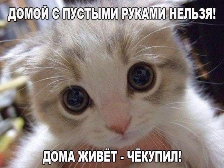 Смешные картинки с надписями про котов   Кошачьи мемы ...