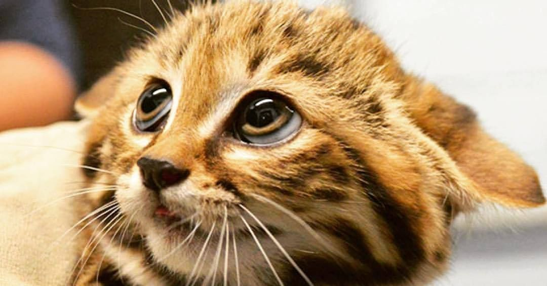 Мужу, самые смешные картинки мира с кошками
