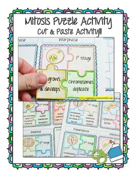 mitosis puzzle activity answer key