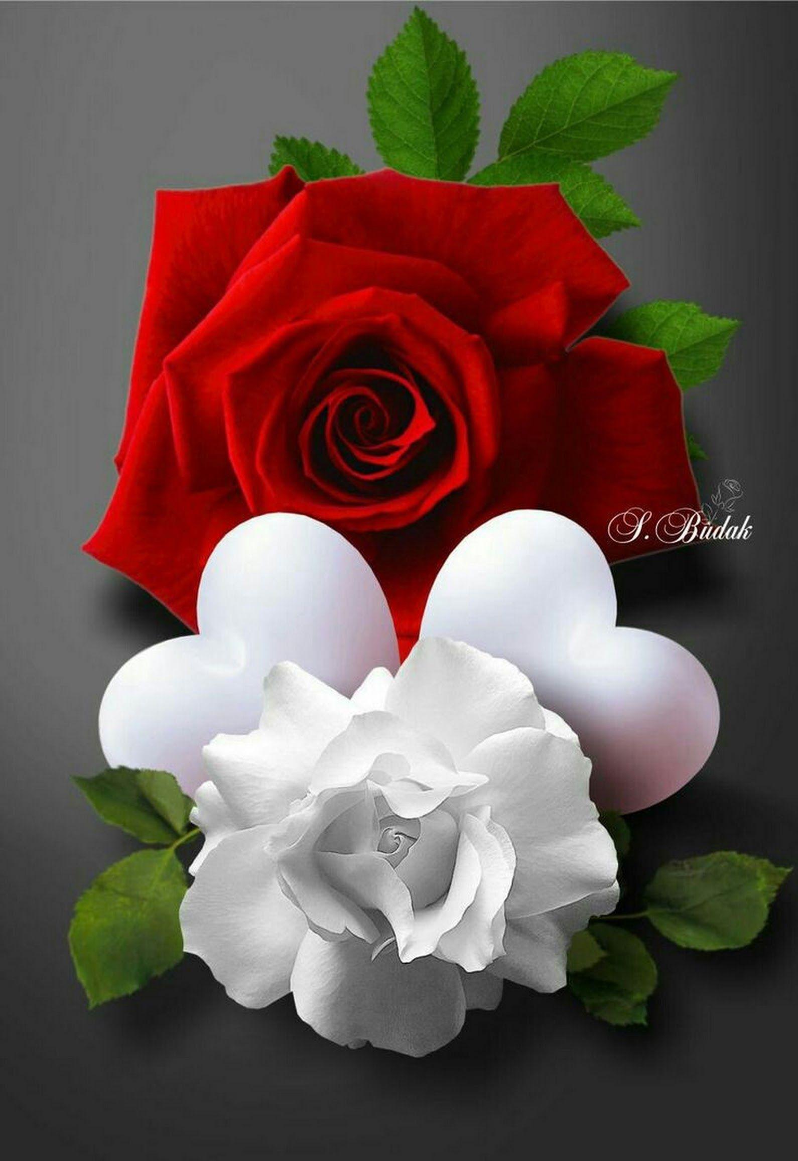 Hossein Con Imagenes Rosas Bonitas Rosas Flores Bonitas