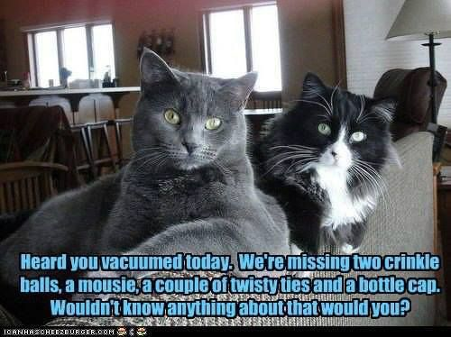 Yes folks, our furrbabies maintain a complete and accurate inventory of all their