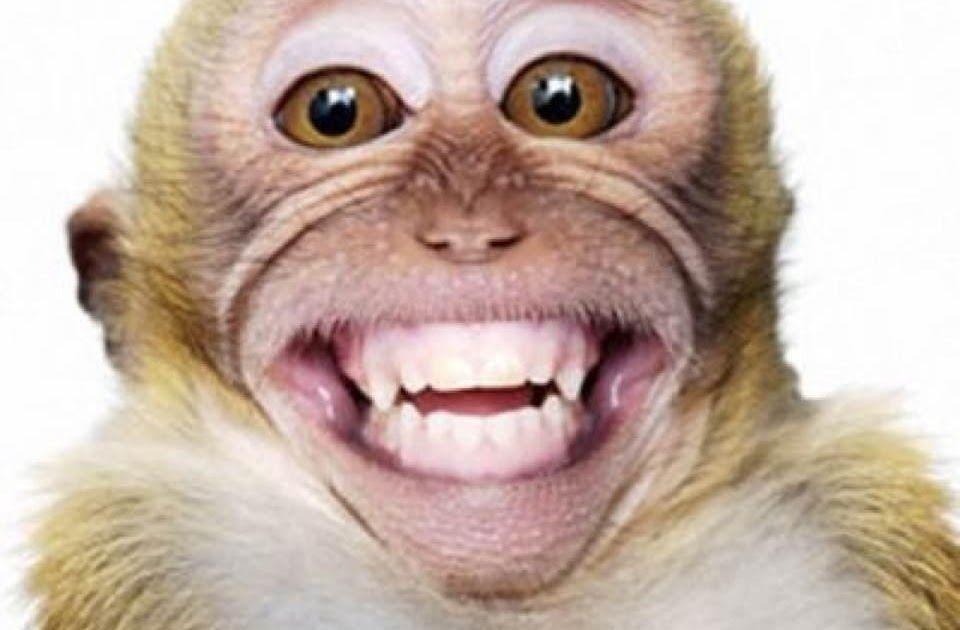 Fantastis 28 Gambar Monyet Lucu Kartun Gambar Monyet Lucu Banget Bergerak From Www Gambarunik Id Download 910 Gambar Hewa Gambar Kartun Gambar Hewan Lucu