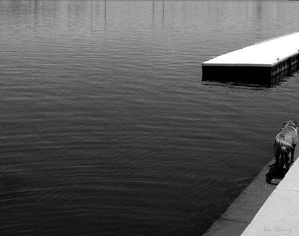 """Water's Edge"" (Black and white photography by Lin Haring) A minimalist monochrome study of the many varied shade of black and white on a hot summer day at a lake."