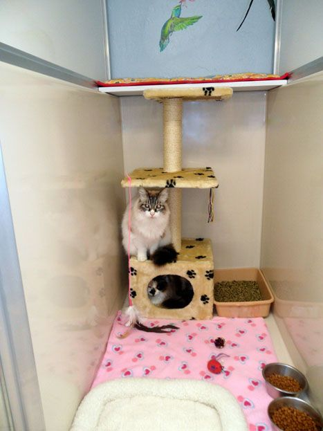 Northgate Veterinary Supply Cat Chateau Luxury Cat Boarding Suites Luxury Cat Luxury Dog Kennels Dog Kennel