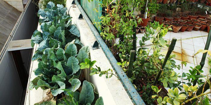 7 Schritte zum Pflanzen eines Containergartens The