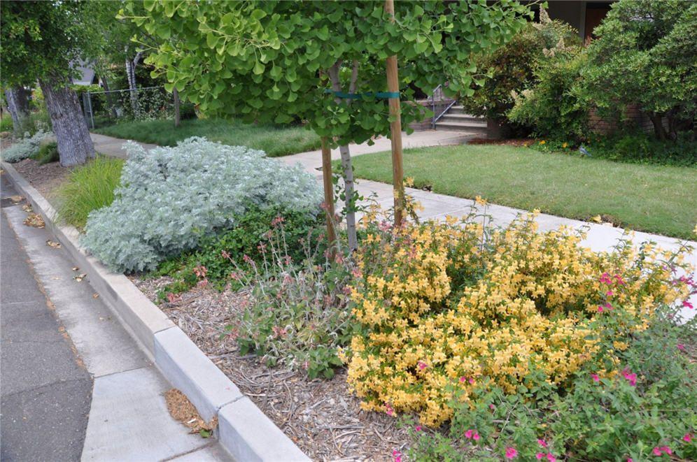 Parking Strip Lodi Corner Garden Three Corner Garden City Garden Xeriscape