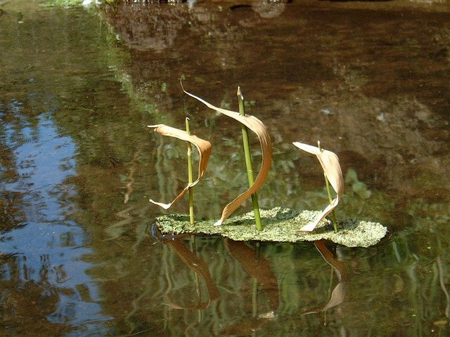 Bark boat Adult Crafts, Toddler Crafts, Toddler Activities, Boat Crafts, Youth Club, Robinson Crusoe, Boat Projects, Land Art, Go Outside