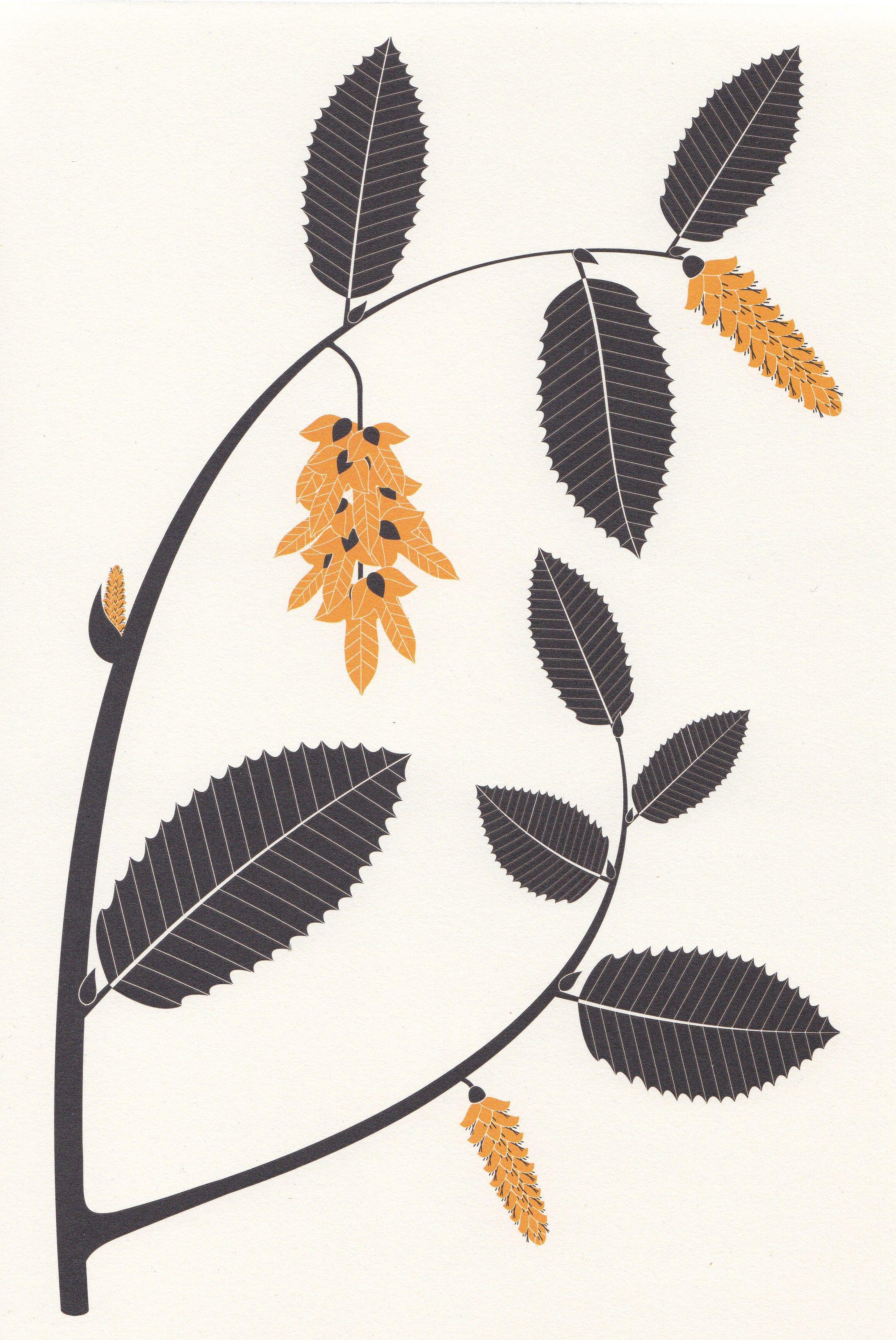l 39 herbier d 39 emilie vast arbres feuillus d 39 europe le charme botanika pinterest botanical. Black Bedroom Furniture Sets. Home Design Ideas