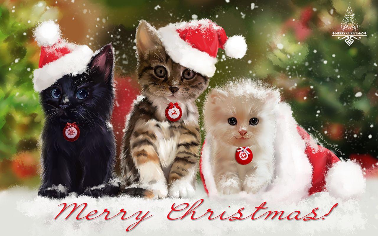 Christmas Kitten Cats Wallpaper Desktop Nexus Animals ...