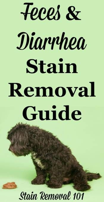 how to remove dog poop stains from carpet