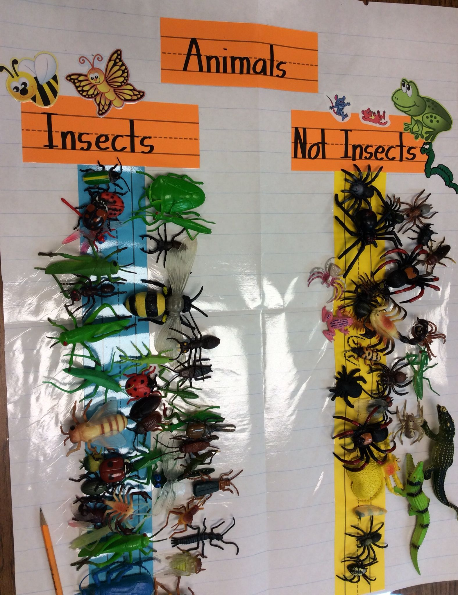Insects And Not Insects