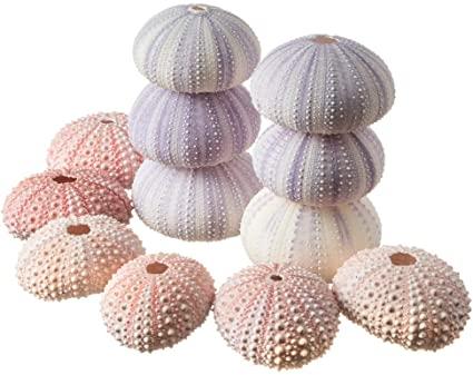 Amazon Com Sea Urchins 6 Pink Sea Urchin Shells 6 Purple Sea Urchin Shells Craft And Decor Plus Free N Purple Sea Urchin Sea Urchin Shell Shell Crafts