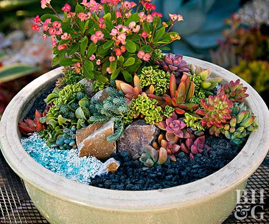 Make A Mini Succulent Garden In A Pot