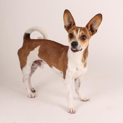 Radar is a Terrier mix who is available for adoption at