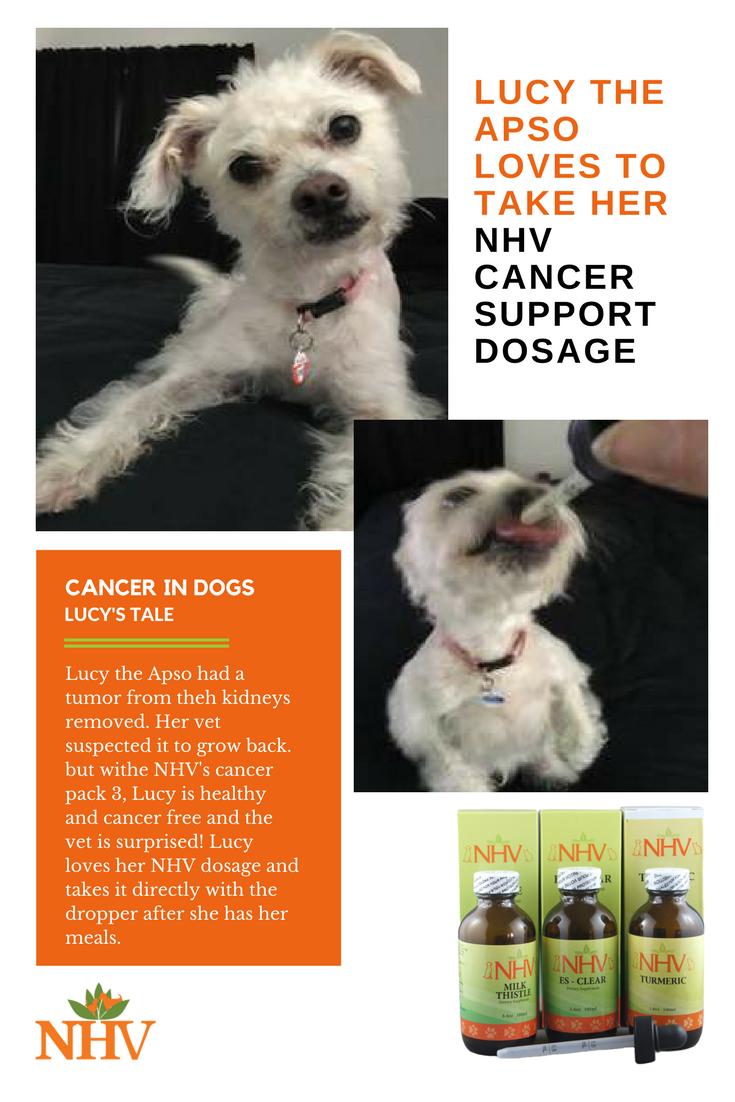 bladder cancer dog
